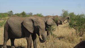 elephants-3