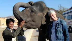 jaipur-baby-elephant